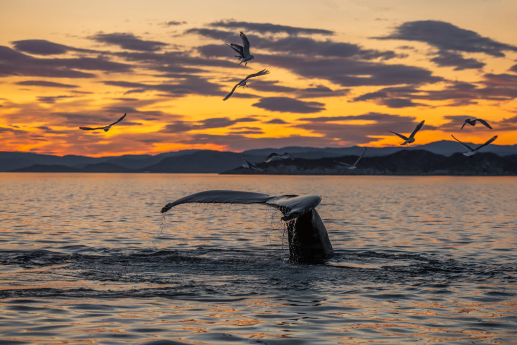 Booking software for whale watching