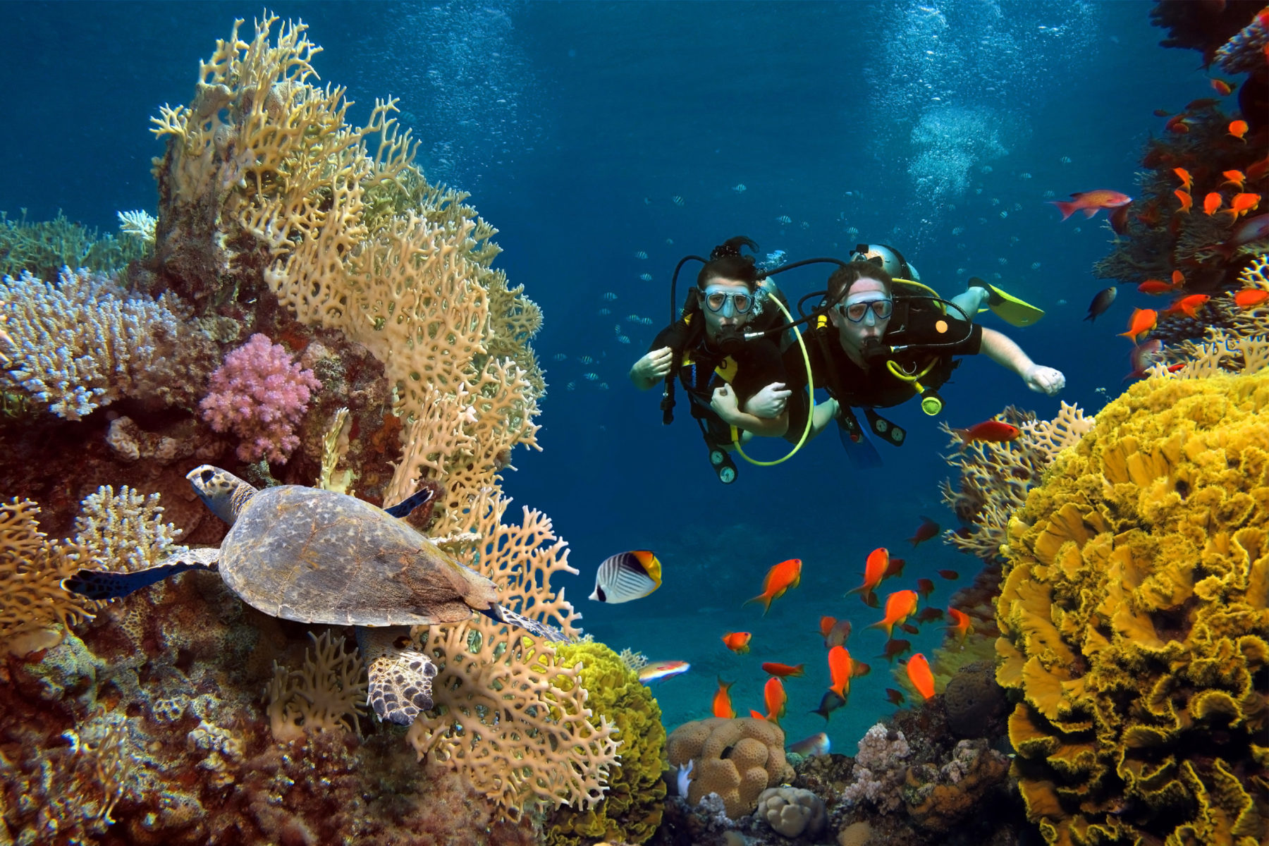 loving couple dives among corals fishes ocean scaled e1603119544906